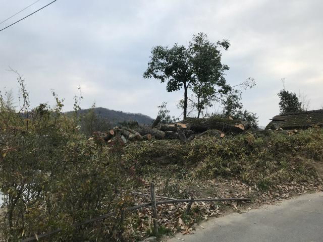 N邸樹木伐採